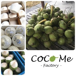 Coco Me Factory (โคโค่มีแฟคทอรี่)